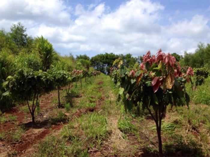 2) Lonohana Hawaiian Estate Chocolate