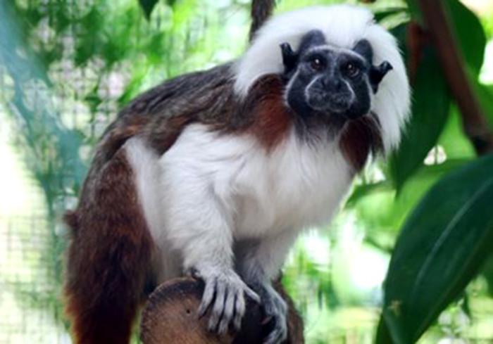 2) Pacific Primate Sanctuary