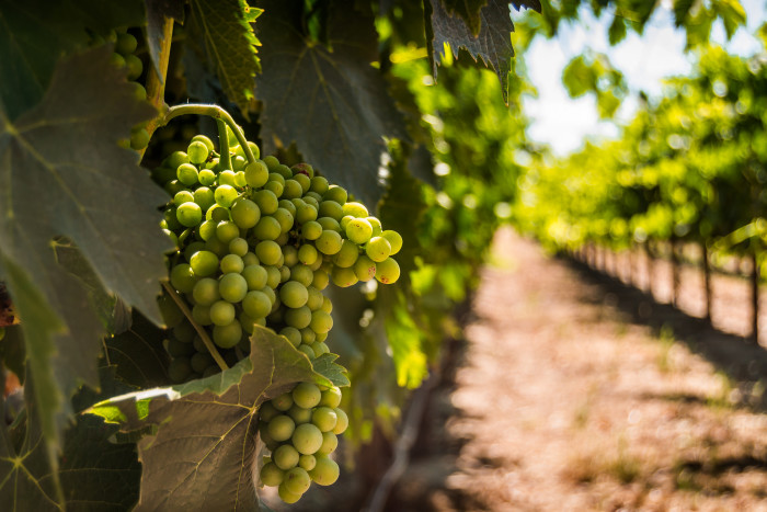 10. Visit a winery and take a tour. They're delightful and relaxing.