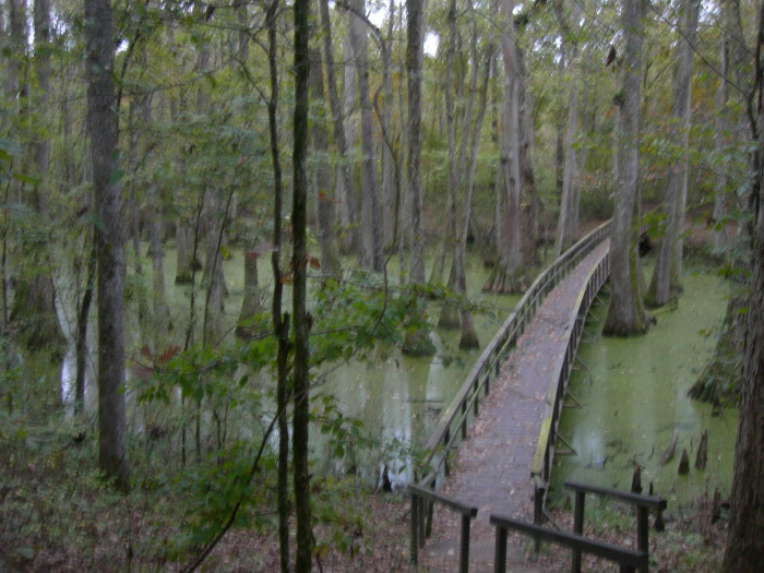 2. Natchez Trace Parkway Cypress Swamp Hike, near Canton