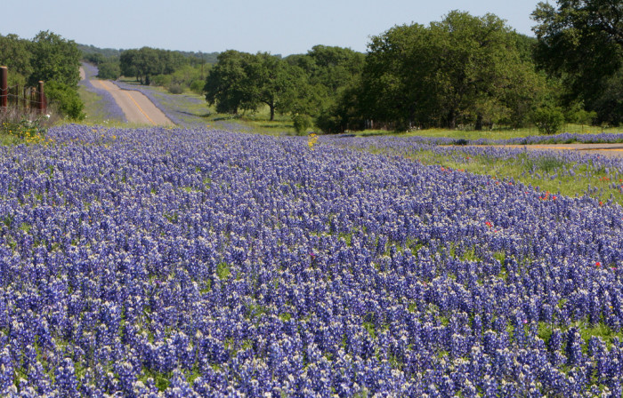 2) These rolling hills covered in bluebonnets in Mason County are just breathtaking!