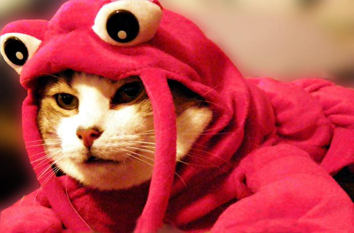10. Lobster/Sea Creature
