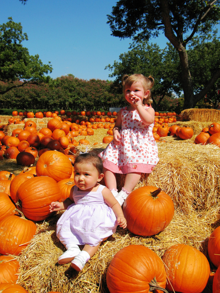 2) Going to the local pumpkin patch with our families to pick out the perfect pumpkin (and taking adorable photos of our children).