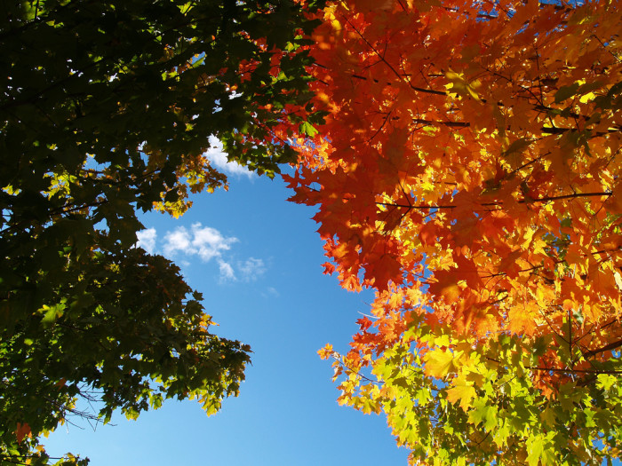 10 Reasons Why Fall Is The Best Time Of The Year In Michigan