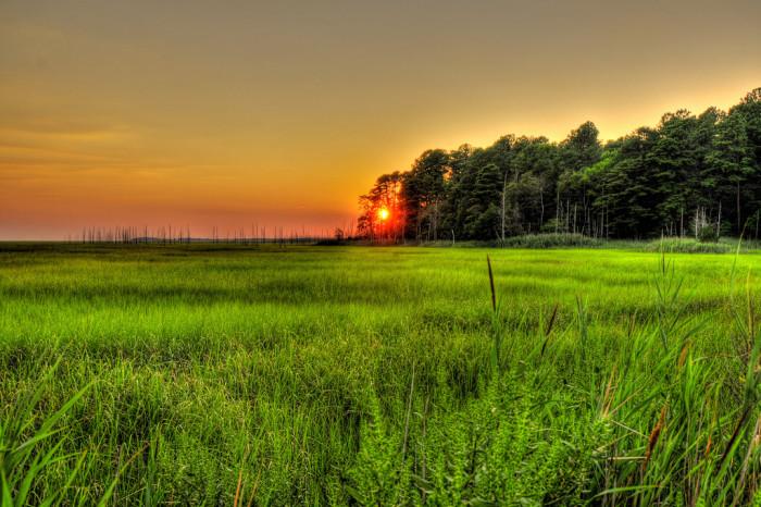 10. Breathtaking Wetlands