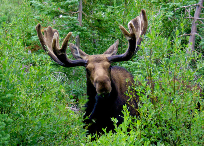 5) Running Into a Moose on the Trail