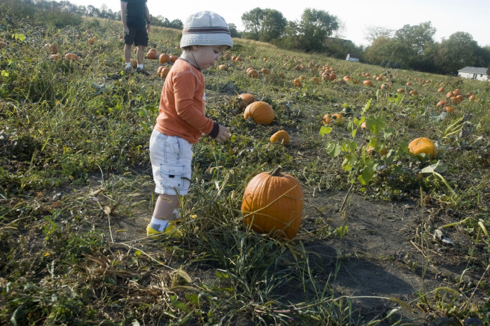 6. Also, visit your local pumpkin patch.