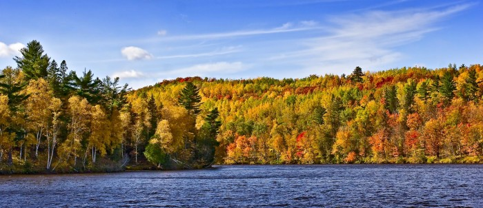 5. Enjoyed the amazing fall foliage - probably on a drive up north.