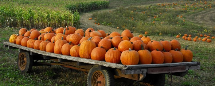 Don t miss these 10 great pumpkin patches in iowa this fall - Fall wallpaper pumpkins ...