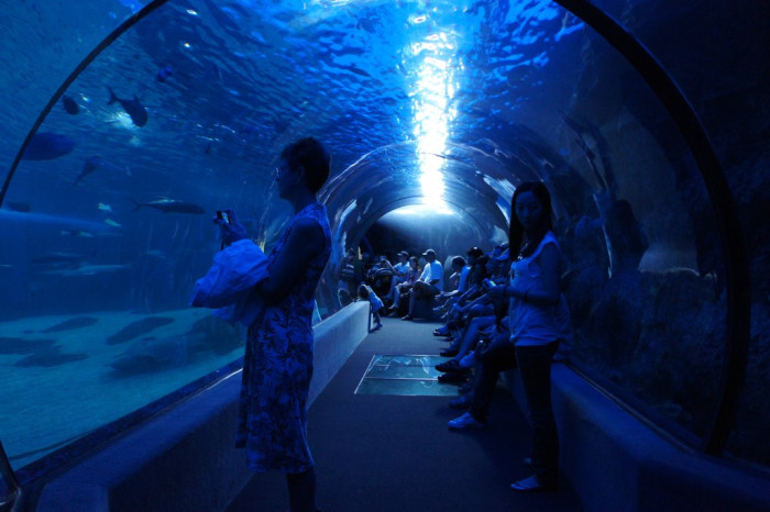 3) Enjoy the water without being drenched at the Waikiki Aquarium or the Maui Ocean Center.