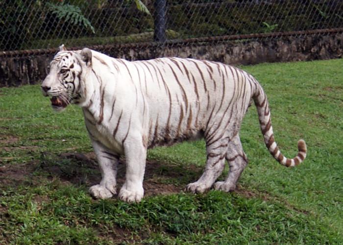 3) Panaewa Rainforest Zoo, Big Island