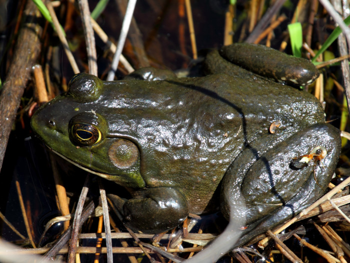 3.  You have ever been frog-gigging.