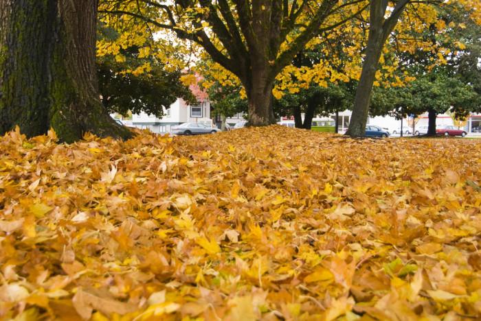 9) Piles of Leaves