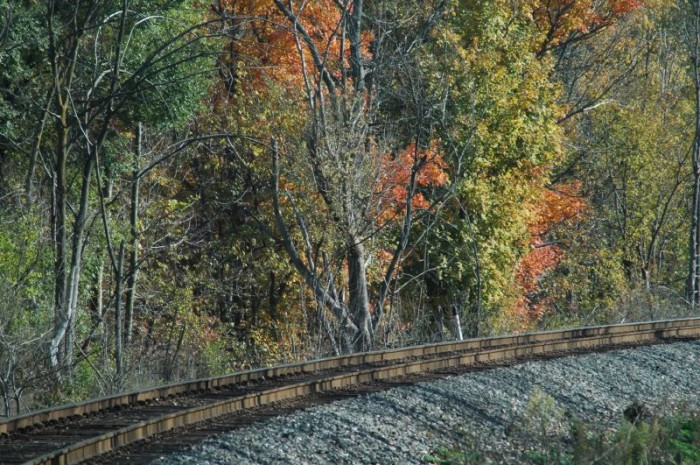 12. This is a picture taken in Clermont. I wouldn't mind looking at those trees while riding on that train. How about you?