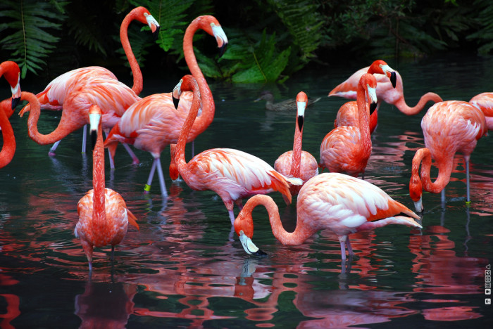 4. Sarasota Jungle Gardens