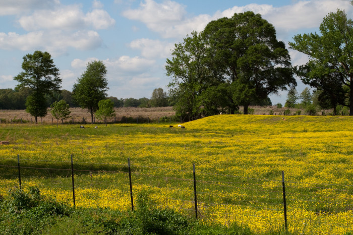 3. Passing this brightly colored field of flowers on Highway 16 near Benton could brighten anyone's day.
