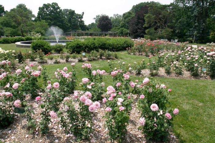 11. Visit the Columbus Park of Roses