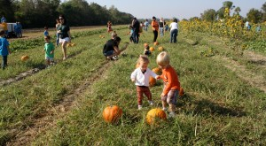 10 Amazing Pumpkin Patches To Visit In Louisiana