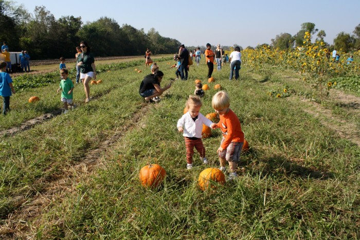 11 Awesome Pumpkin Patches In Louisiana
