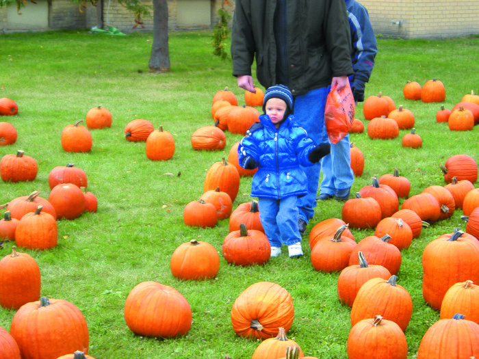 6. Visit the pumpkin patch and the corn maze. Enjoy the Halloween spirit!
