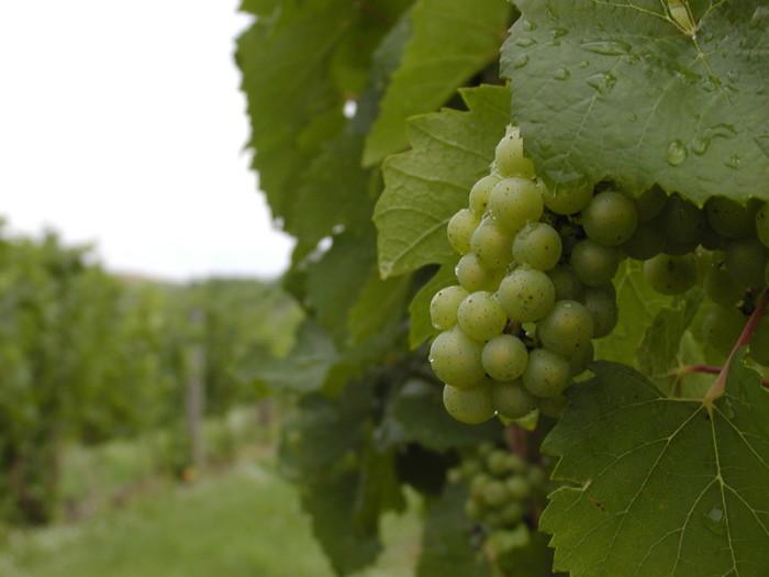 9) Take a wine tour