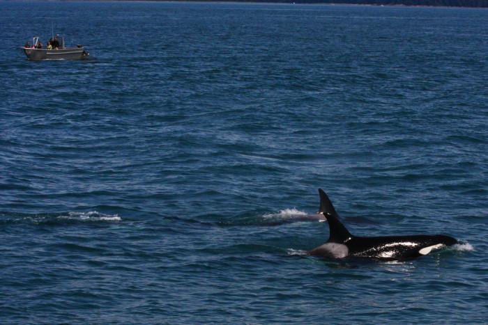 3) Juneau Whale Watch Tour