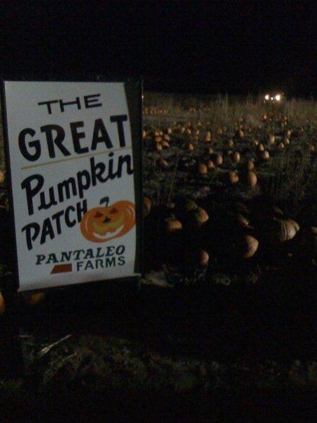 8. Pantaleo Farms - The Great Pumpkin Patch (Vineland)