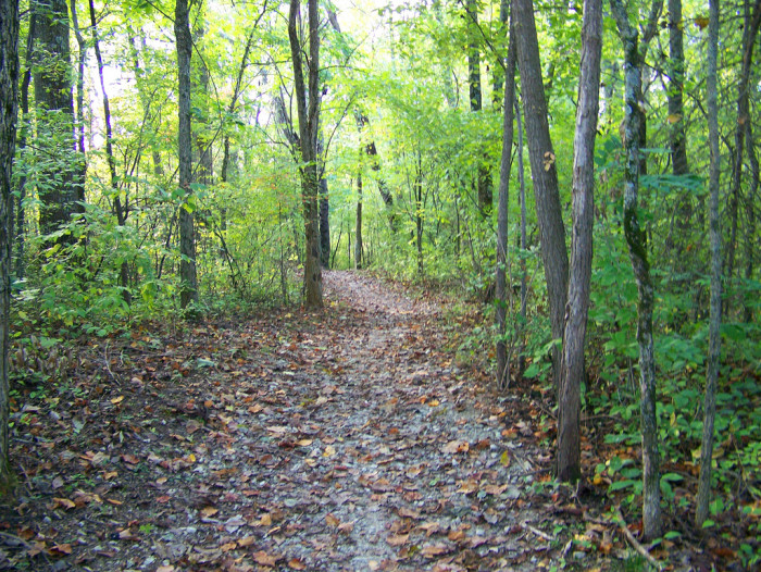 10. This is Thompson Park in Bloomington. Trails are always fun to explore right?