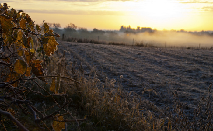 3. And the thick morning fog that comes with autumn begins to spread through the valleys and fields.