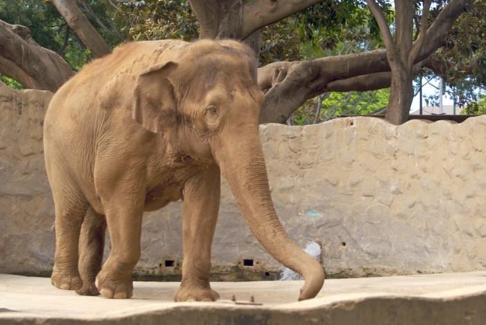 4) Honolulu Zoo, Oahu
