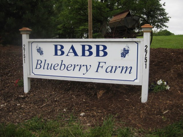4. Babb Blueberry Farm, 2751 highway 50, Beaufort