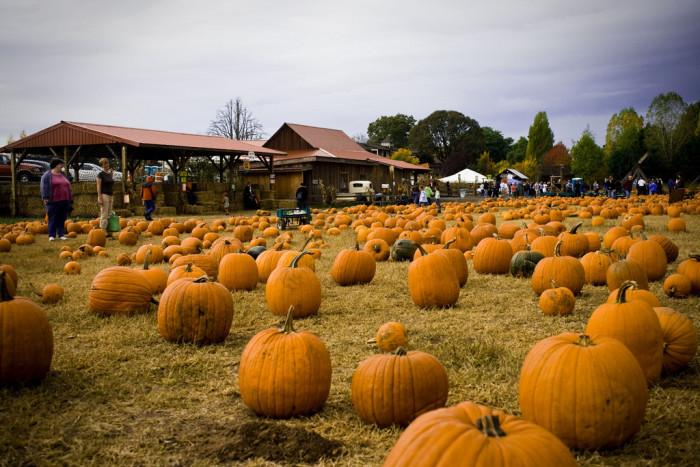 7) Pumpkin Patch