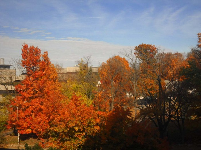 11. Doesn't look like Indiana University is a bad place to go if you are looking for some pretty fall foliage to gaze at.