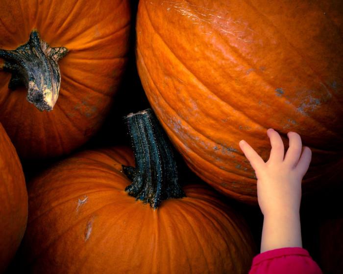 15. Pick a pumpkin.