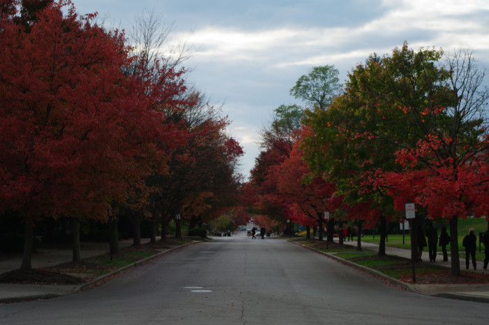 9. This is 7th Street in Bloomington. I don't know about you, but the beautiful vibrant red trees get me every time!