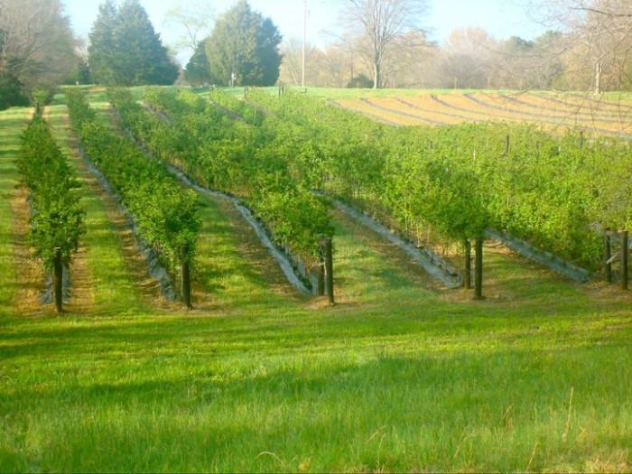 4. Cedar Hill Farm, Hernando