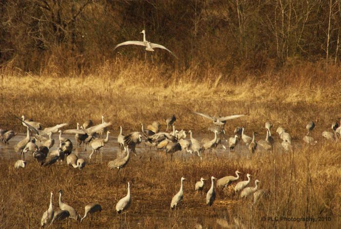 4. Wheeler National Wildlife Refuge