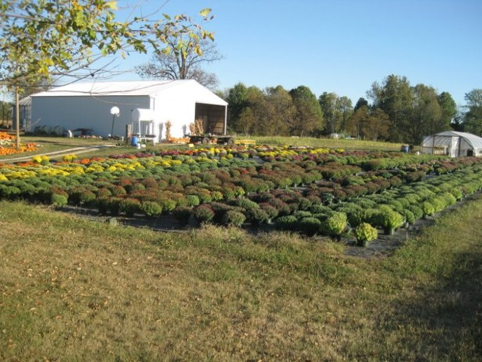 4. Armand's Harper Valley Farms (13094 South County Road 600 West, Westport)