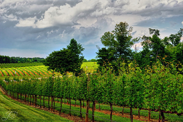 14.  We have a gorgeous wine country