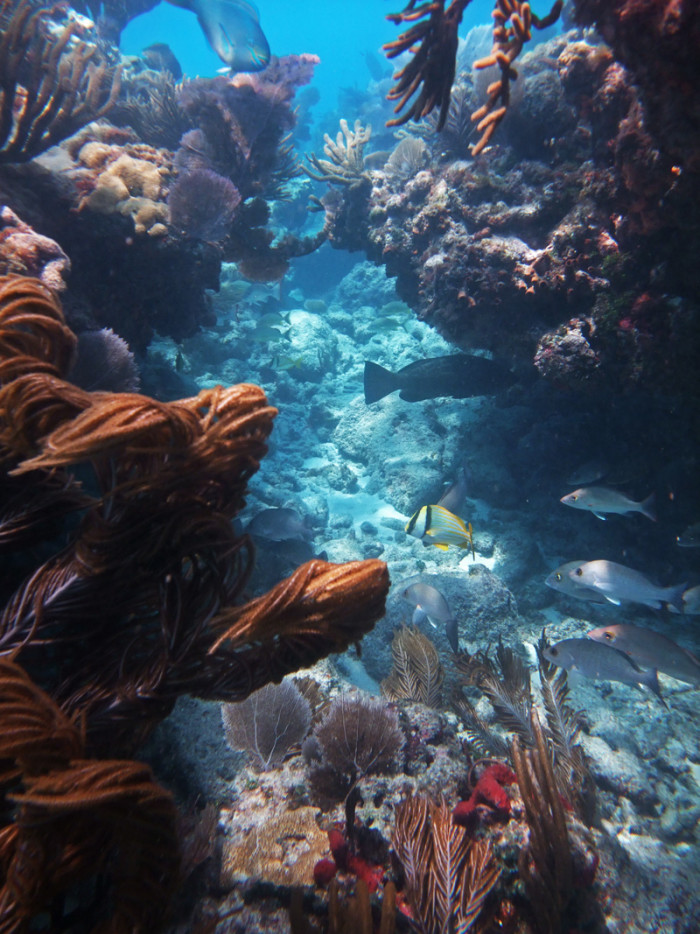 14. We have the only living coral barrier reef in the continental US.