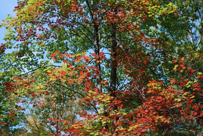 8. As the colors turn, Banning State Park showcases the best of two seasons!