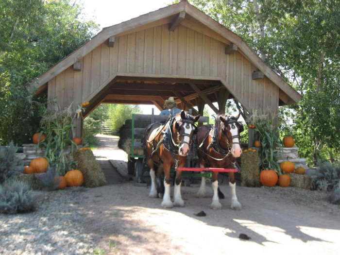 7. Covered Bridge Ranch (Montrose)