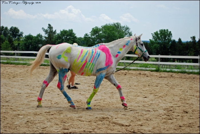 8. It's also illegal to paint a horse--even when it's not war time.