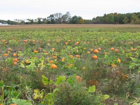 12. Kregel's Pumpkin Patch (7705 W 159th Ave, Lowell)