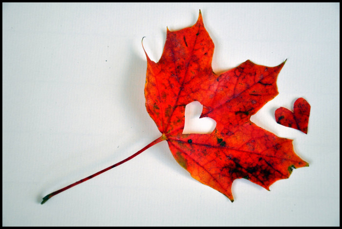 13. Never stop talking about how much you love fall and how you wish it would last more than (basically) three days.