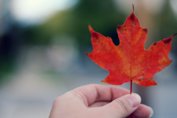 4. The leaves begin to turn from their simple, summer green to rich, bright reds, firey oranges, and golden yellows.