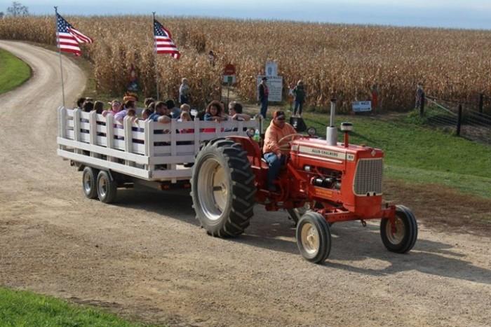 4. Schuster's Pumpkin Patch and Corn Maze