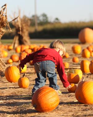 5. Pumpkin Patches