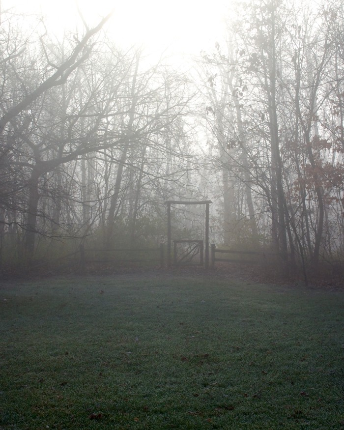 5. Foggy Forest Gateway, Columbia