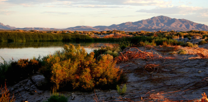 11. Ash Meadows National Wildlife Refuge